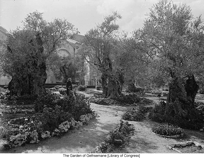 The Garden of Gethsemane [Library of Congress]