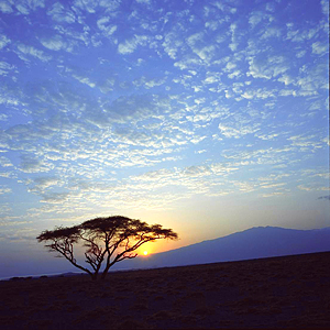 Acacia tree, sun low on horizon at Lake Natron