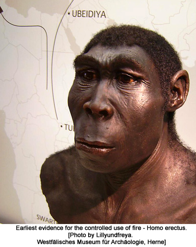 Reconstruction of a Homo Erectus [Photo by Lillyundfreya. Westfälisches Museum für Archäologie, Herne]