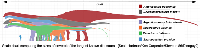 Scale chart comparing the sizes of several of the longest known dinosaurs - [Scott Hartman/Ken Carpenter/Steveoc 86/Dinoguy2]