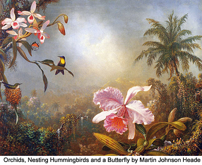 Orchids, Nesting Hummingbirds and a Butterfly by Martin Johnson Heade