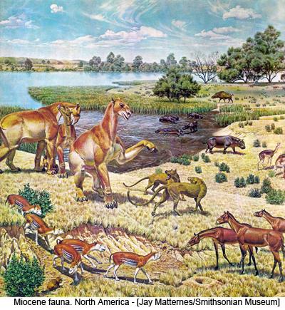 Miocene fauna. North America - [Jay Matternes/Smithsonian Museum]