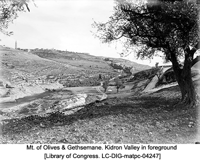 Mt. of Olives & Gethsemane. Kidron Valley in foreground [Library of Congress. LC-DIG-matpc-04247]