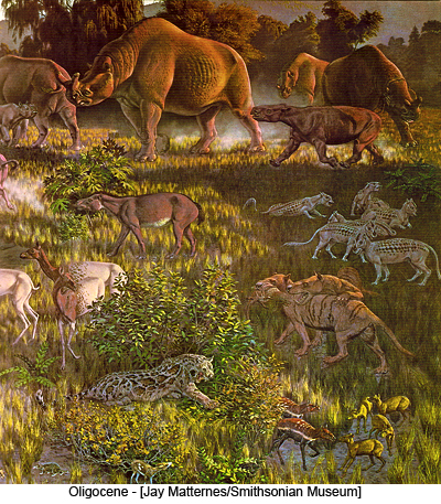 Oligocene - [Jay Matternes/Smithsonian Museum]