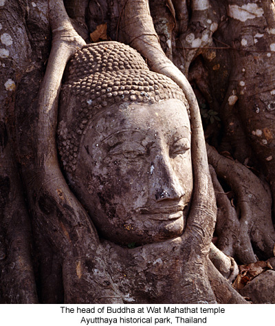 The head of Buddha at Wat Mahathat temple, Ayutthaya historical park, Thailand