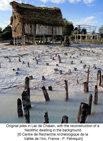 Original piles in Lac de Chalain, with the reconstruction of a Neolithic dwelling in the background. [© Centre de Recherche Archéologique de la Vallée de l'Ain, France - P. Pétrequin]
