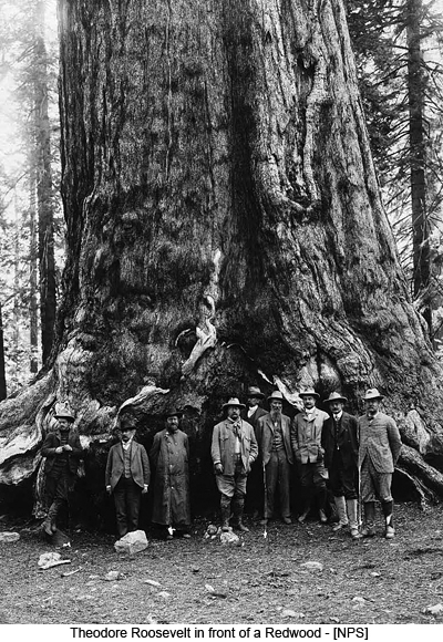 Theodore Roosevelt in front of a Redwood - [NPS]