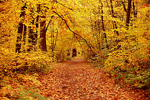Fall in a forest